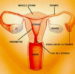 p2.htm_txt_femme